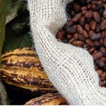 Cocoa to Commerce: When Challenges Become Opportunities
