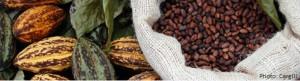Cargill cocoa bean (1)